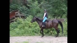 Продаётся лошадь тракененской породы