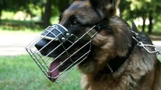 シェパード マズルガード ワイヤータイプの犬口輪! 軽量で、安全! ジ...