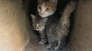 New kittens with mother cat live in the basement