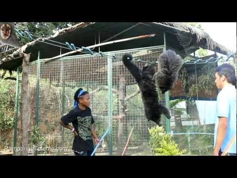 Part 1/3: Zoocobia Fun Zoo at Clark Pampanga Philippines