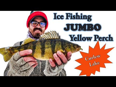 Ice Fishing Jumbo Yellow Perch (Washington State)