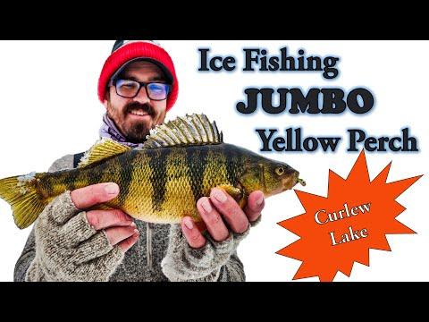 Ice Fishing Jumbo Yellow Perch (Washington State)