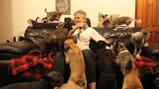 Dog-mad woman lives with staggering 41 dogs in semi-detached home