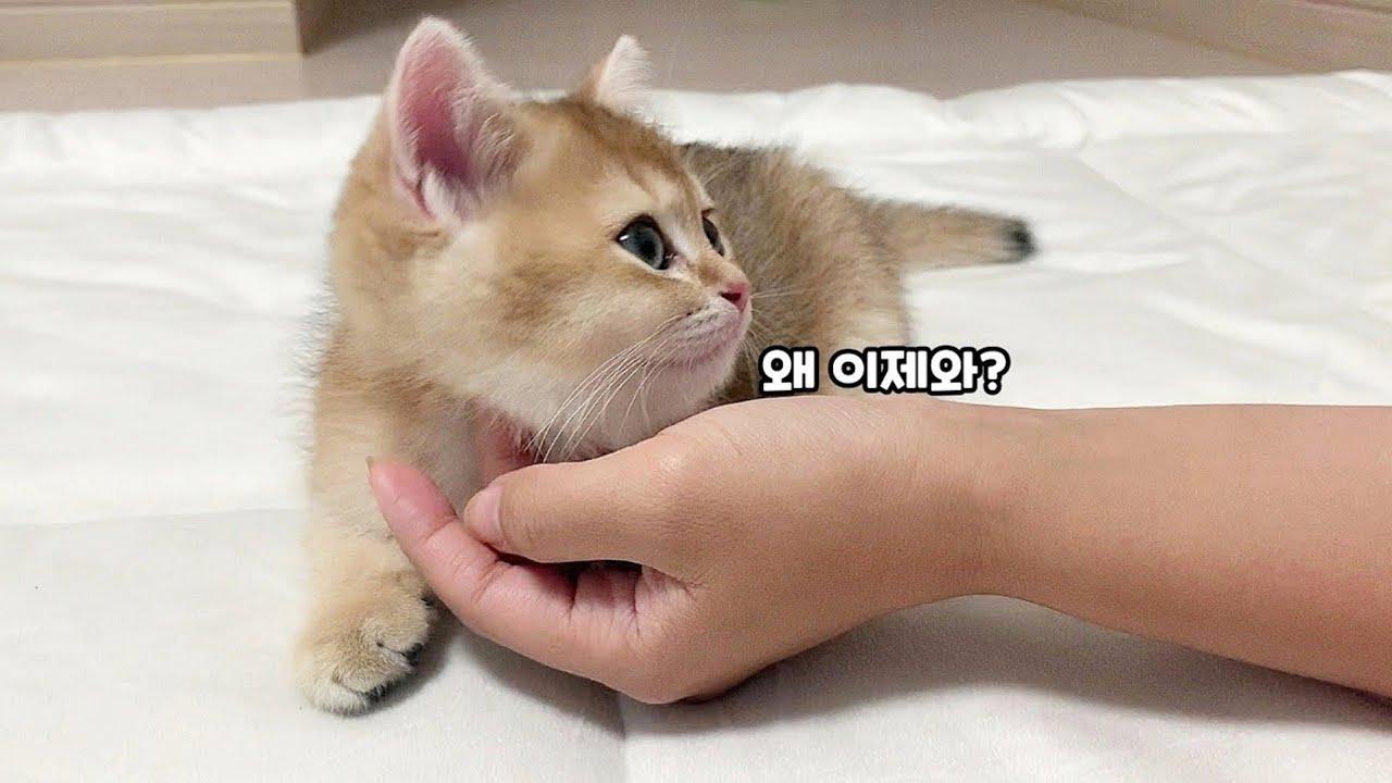 자다 깨서 집사가 없으면 서러움 터지는 고양이