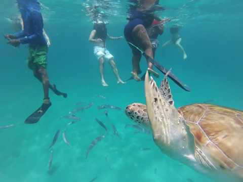 Snorkeling with turtles in Barbados