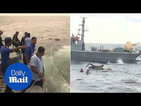 Incredible rescue of elephant lost swimming five miles out at sea - Daily Mail