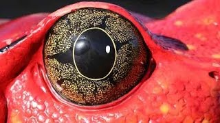 Documentaries Discovery channel animals - Amazing Evolution of Eyes Nature Documentary Animal planet