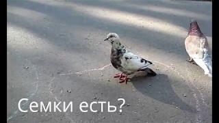 """Художественный фильм """"Любовь и голуби"""". Пародия Юмор"""