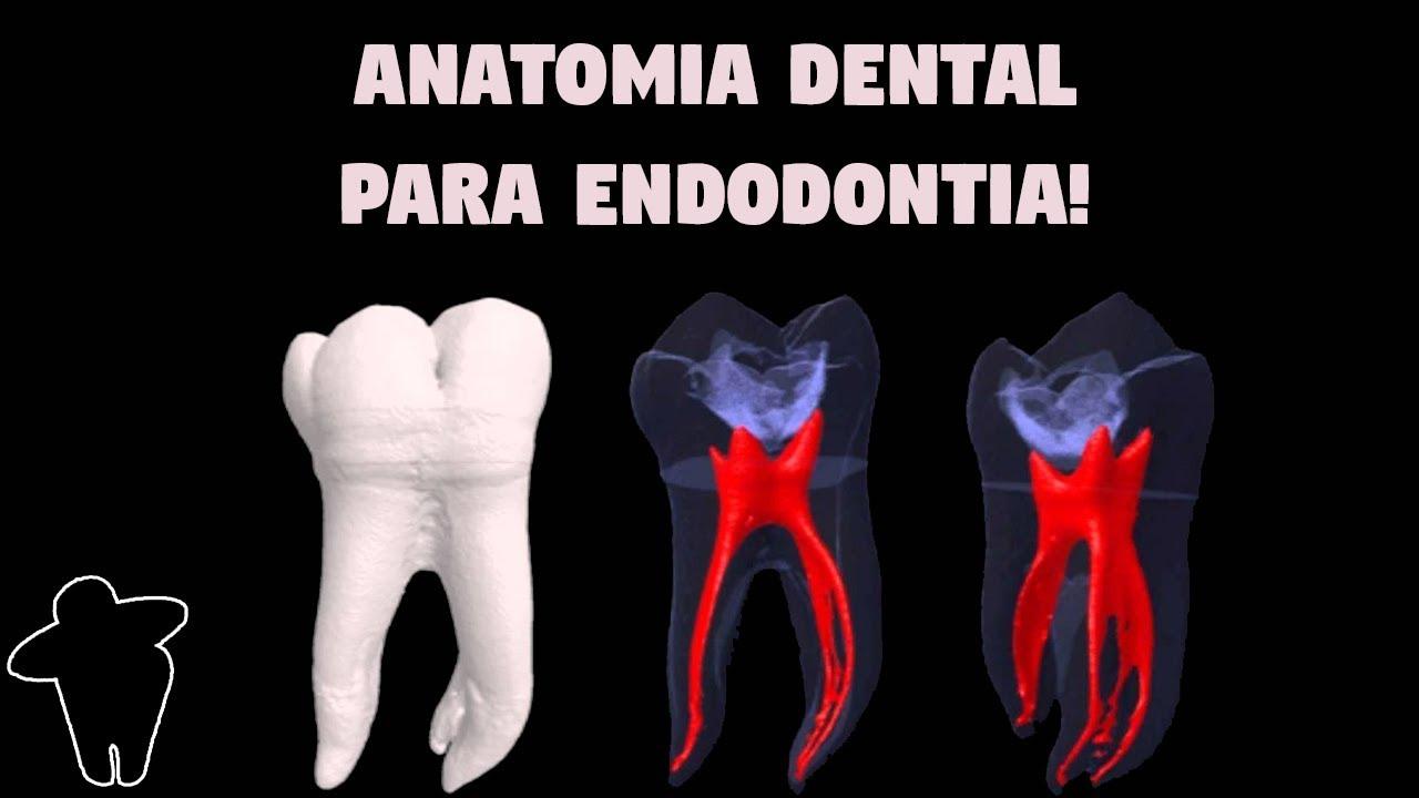 [Dentista Estuda #4 PT 1] Anatomia Dental Aplicada à