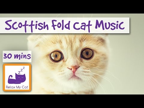 Music for Scottish Fold Cats! Guitar Music to Relax Cats!