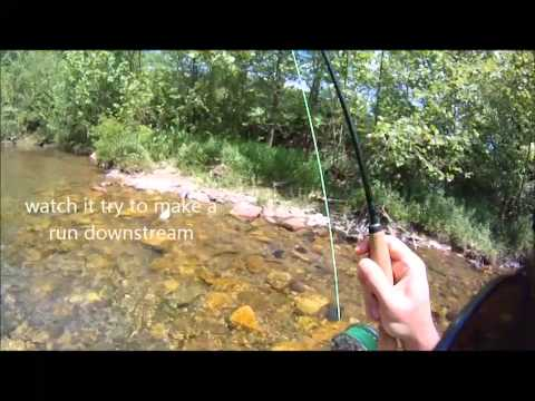 Fly Fishing Big Rainbow Trout On A TFO BVK Rod At Escatawba