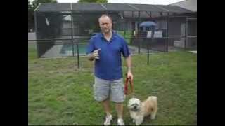 Dog Psychology - The Follower Role