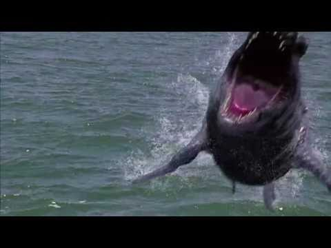 dinoshark 2011 official trailer youtube
