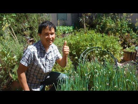 Ageless Man Eats Raw Backyard Plants