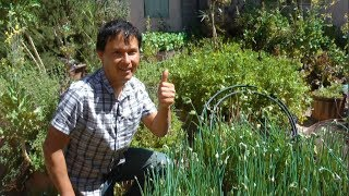 Ageless Man Eats Raw Backyard Plants thumbnail