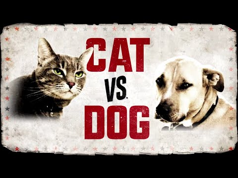 CAT vs. DOG premieres Nov. 11 on Animal Planet