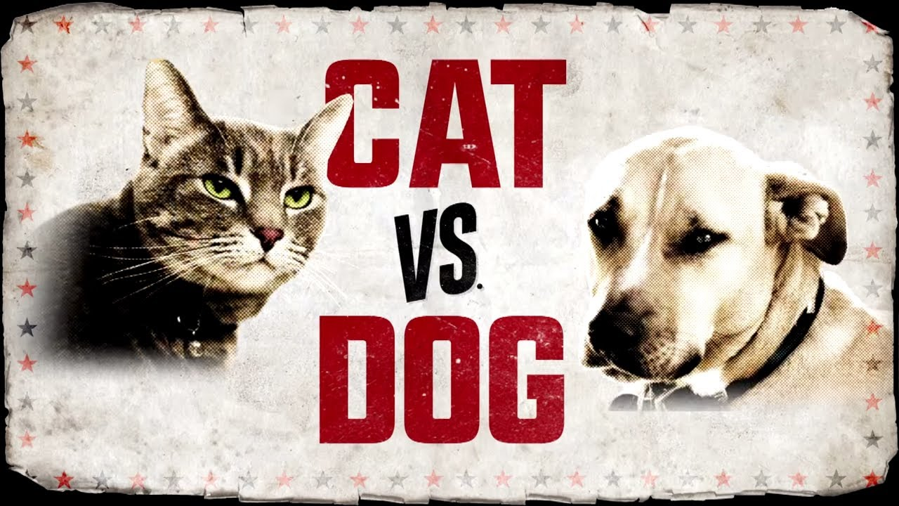 Animal Planet Dogs  Cats Vs Dogs