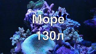 Морской рифовый аквариум на 130 литров с задним сампом часть 2