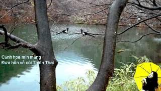 Khóc Hoa Anh Đào - Hàn Thư Sinh