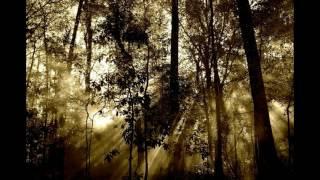 🍃Śpiew Ptaków w Lesie #1 - Odgłosy Natury - Muzyka Relaksacyjna. 2 Godz.🎧👍