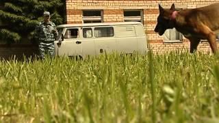 Служебные собаки смоленского кинологического центра