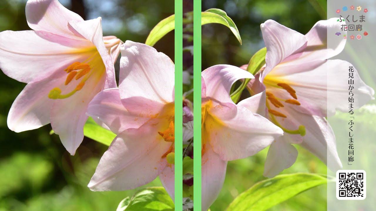 今年のお花見は密を避けて「花回廊」を巡ってみよう!