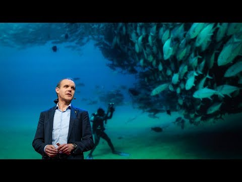 Let's turn the high seas into the world's largest nature reserve | Enric Sala