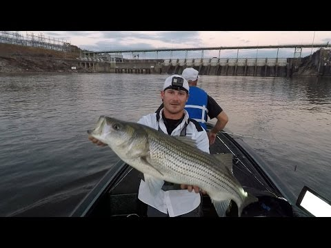EastTNFishing: Thanksgiving 2016 - Topwater Fishing For Stripers - Savage Gear Mud Minnow