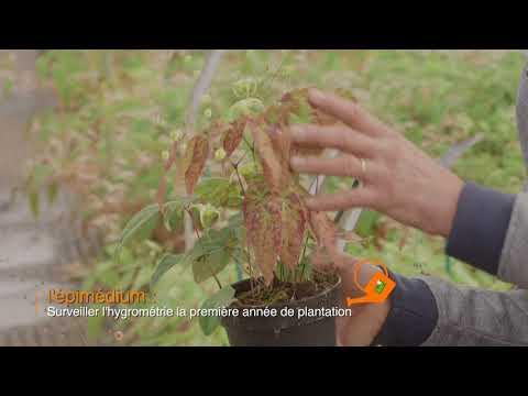 Nouveau film Jardin-Jardinier