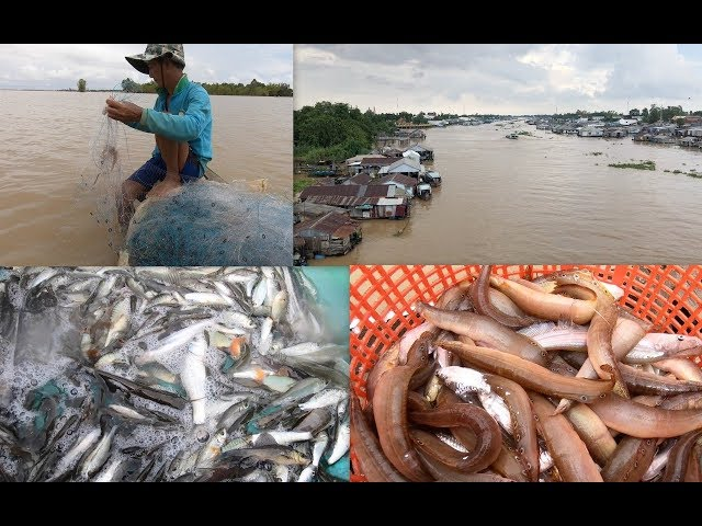 Đổ dớn cá linh, giăng lưới cá chạch, cá rô mùa nước nổi ở đầu nguồn An Giang
