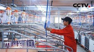 [中国新闻] 中国自主研发非洲猪瘟疫苗取得实验室阶段成功 | CCTV中文国际