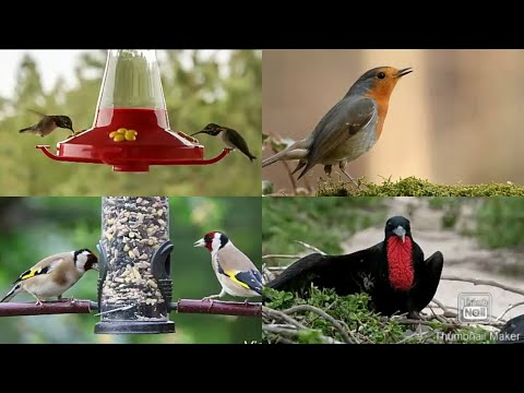 Adorable Cute Birds In The World