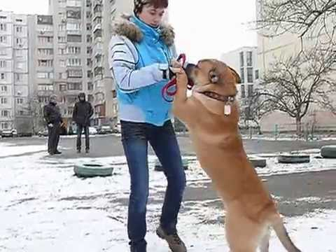 Питомник Ка де Бо Алферор |Щенки Ка де Бо (купить щенка)