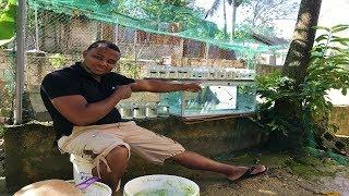 esta-pez-betta-hembra-puede-ser-la-que-ms-cra-saqu
