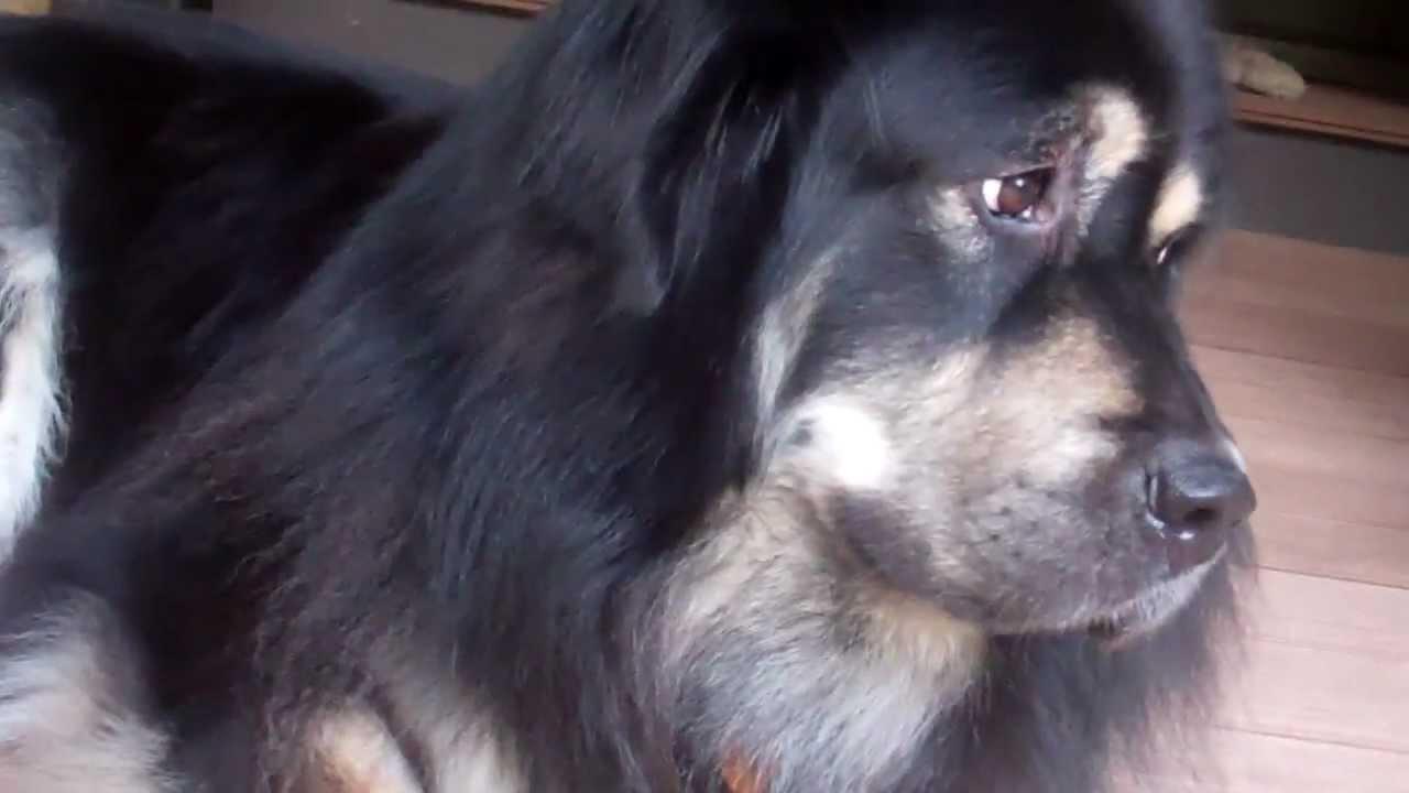 List of Hybrid Dogs  Dog Breed Info