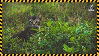 Cat Sound Effect Free Download   MP3 WAV   Pure Sound Effect