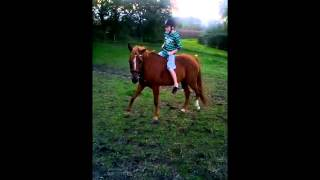 En hverdag med min pony