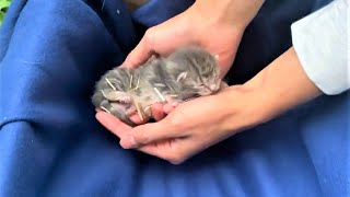 Rescue Mama Cat And Her Newborn Kittens Who're Living In A Shelter In A Backyard