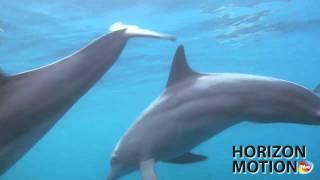 FULL HD 1080P 密克羅尼西亞 丘克島 Chuuk FSM 海豚 海洋 海 動物 海底  aq0000249