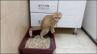 Как приучить котенка к лотку с самого раннего возраста?