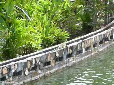 Jardin botanico de caguas youtube for Jardin botanico en sevilla