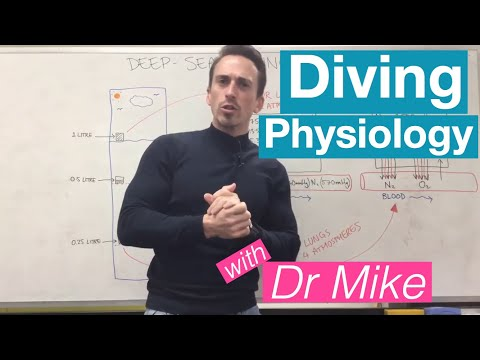 Diving Physiology   Respiratory System