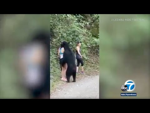 Woman takes selfie as bear sniffs her hair on hiking trail in Mexico
