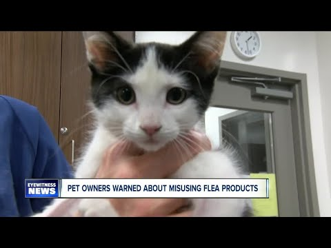 Veterinarians warn pet owners to never use flea medications for dogs on cats and know your cats weig