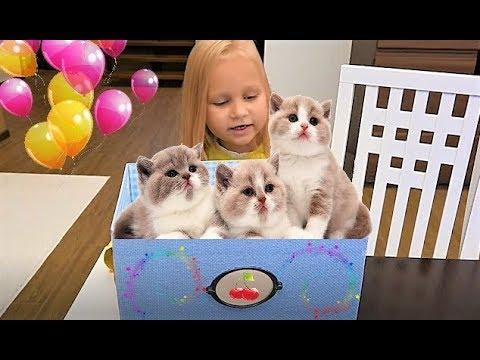 Мультфильм котенок в коробке