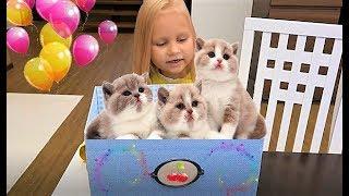 КОТЯТА в КОРОБКЕ у Алисы !!! Мими Лисса видео для детей !