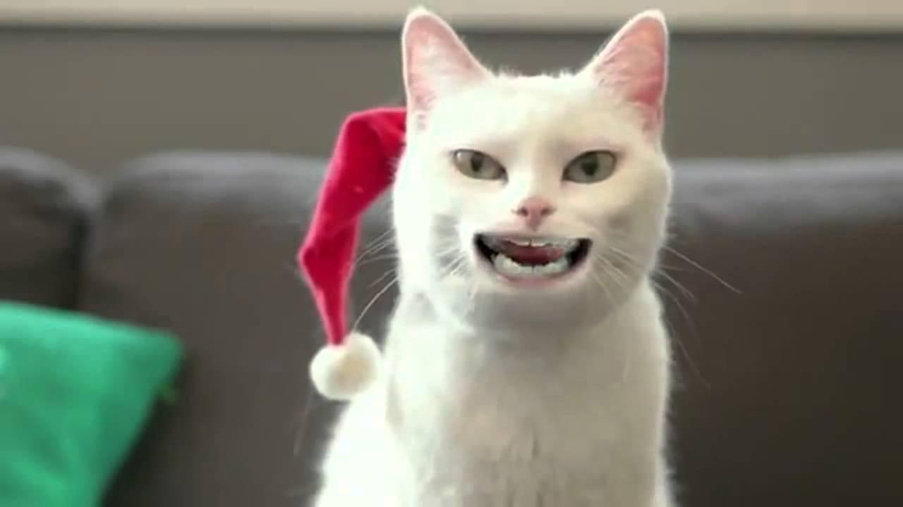Нежная, милая, такая пушистая и очень обворожительная шотландская прямоухая. Это связано с тем, что котята скоттиш-страйт – «дети» шотландской. Белый. Белый котёнок подойдёт тем хозяевам, которые не боятся.