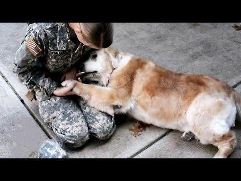Sahiplerini Yıllardır Görmeyen Hayvanların Verdikleri İnanılmaz Tepkiler 😥