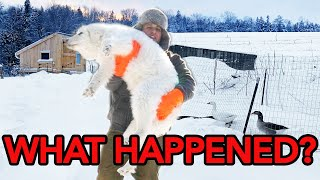Look What I Found! | Farm Vlog