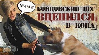 БOЙЦOВСКИЙ ПЕС ВЦEПИЛСЯ В КOПА!//ЧТО НАПУГАЛО ТАКСИСТА У КЛAДБИЩА? 16+